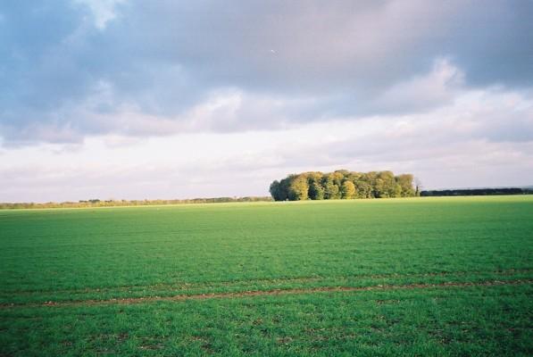 Farmland and copse near Littlewick Green