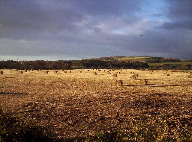 Field of Bales