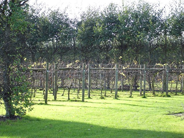 Bearsted Vineyard