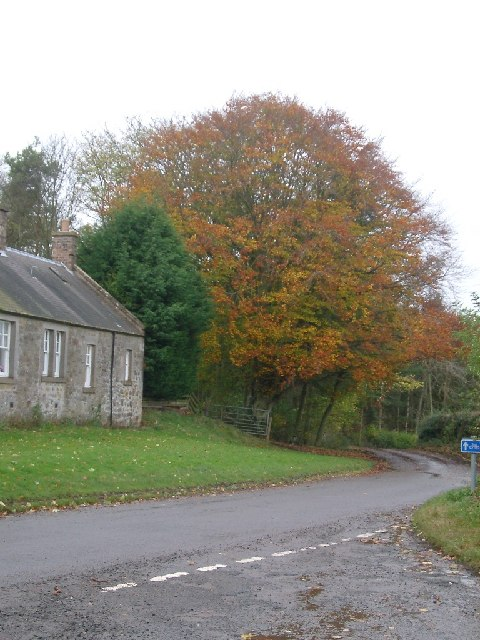 Cottage and tree, Castleton