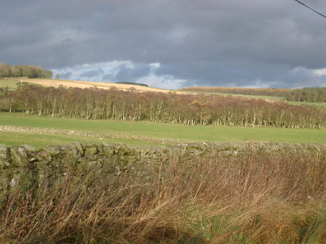 West end of wood south of Flass farm