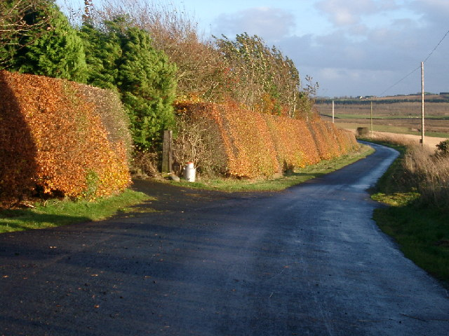 hedge at Fawside Lodge