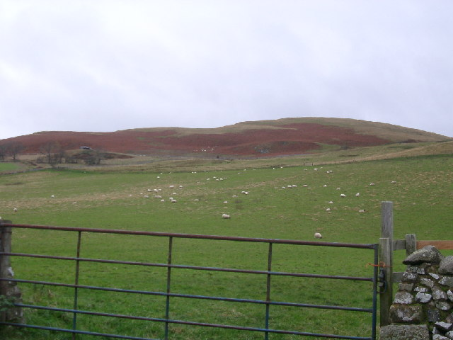 looking up to Sunnyside hill, nr Kirk Yetholm