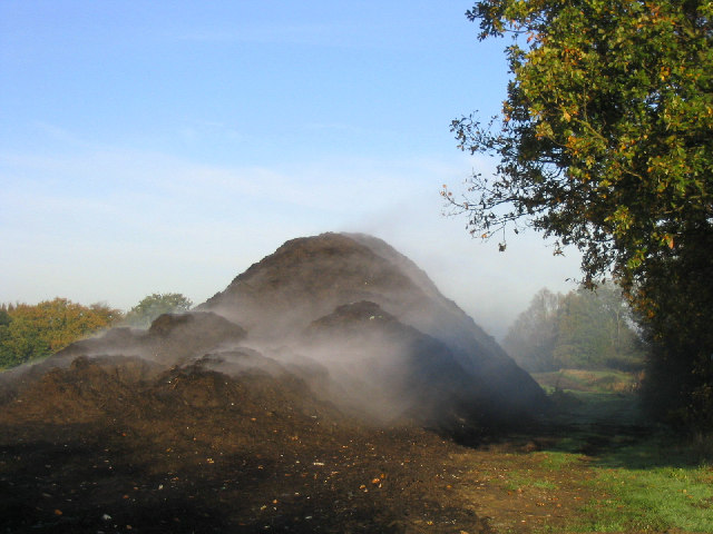 Gently steaming compost!