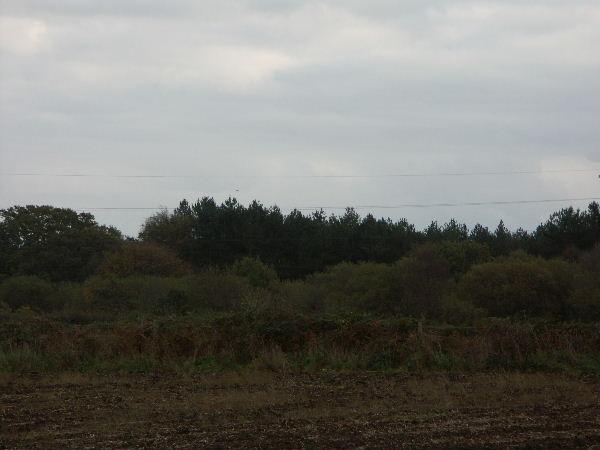 King's Rew Copse, Nr Stanswood Farm, Hants.