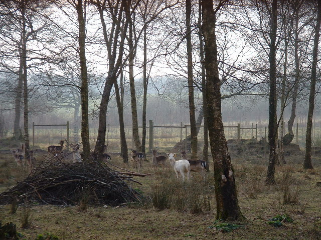 Deer at Upcott