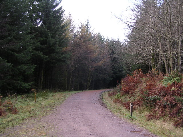 West Highland Way in Garadhban Forest