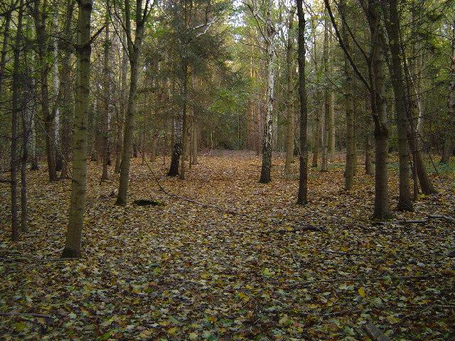 Sarratt: Great Wood, Micklefield Green