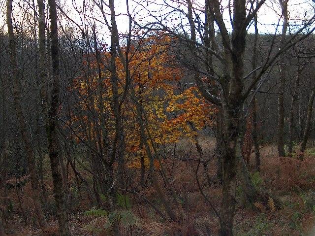 Mugdock Wood, Last Leaves