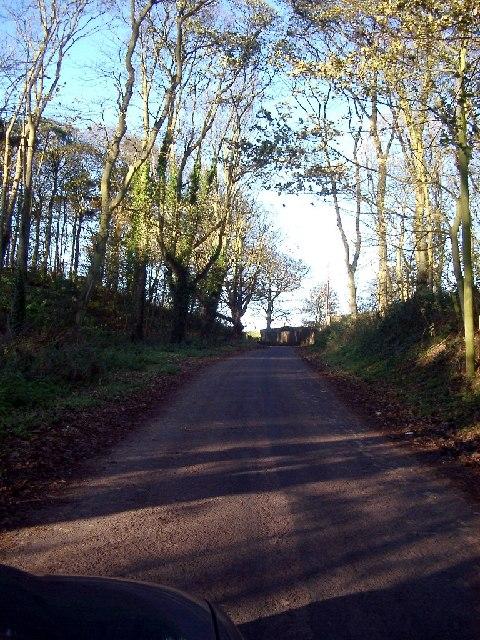 Wood between Windyridge and Borewell