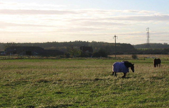 Field, horses and White Hall Farm