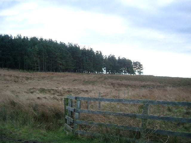 Forest near Botany, Hepburn Moor