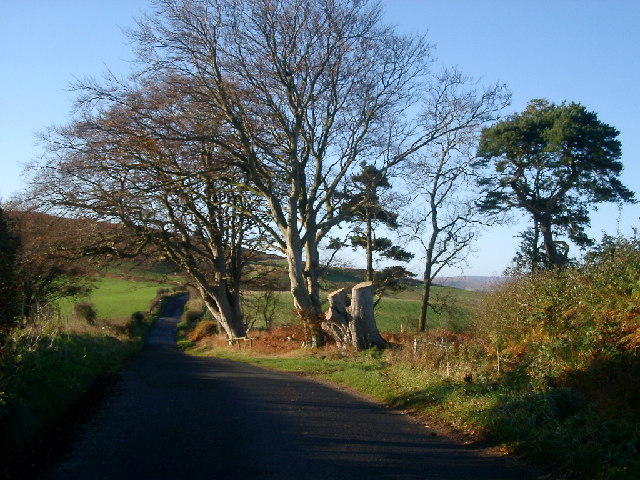 Trees and Road near Eglingham