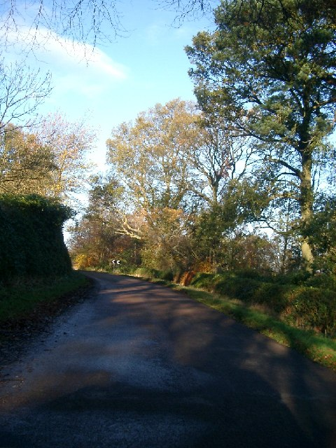 Trees at the bend in the road near Hedgeley Hall