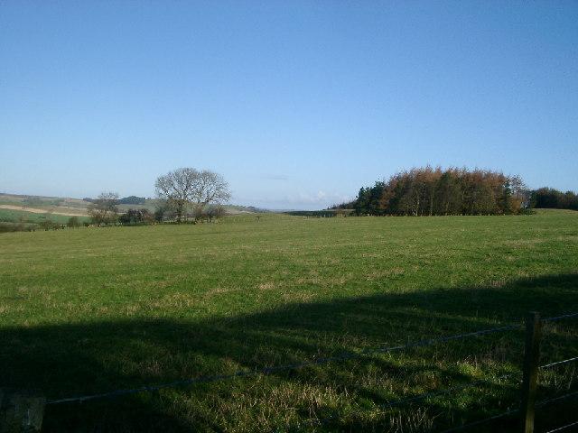 Field & Trees near Mile End Farm