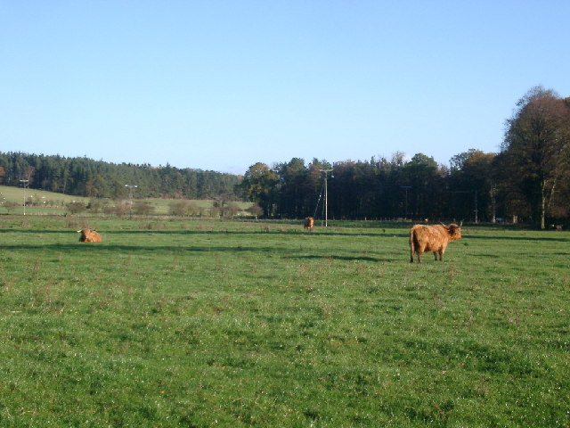 Fields and cattle, Eslington Park