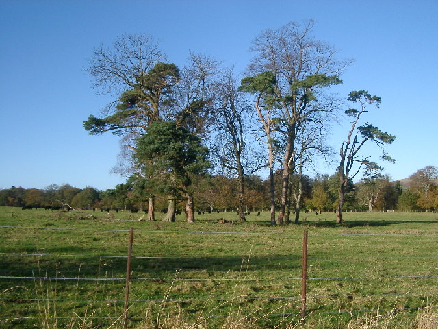 Trees in field, Eslington