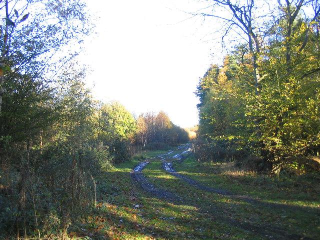 Forestry road - Fryerning Wood, Essex