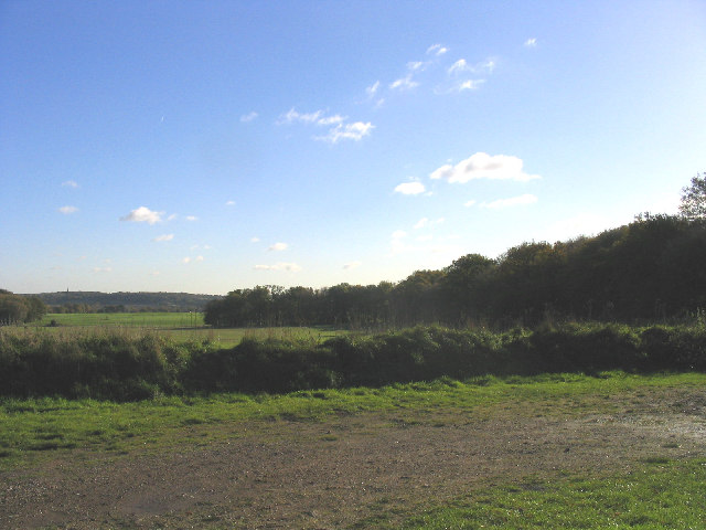 Chapel Wood near Margaretting, Essex