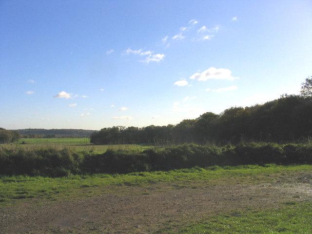 Chapel Wood near Margaretting, Essex