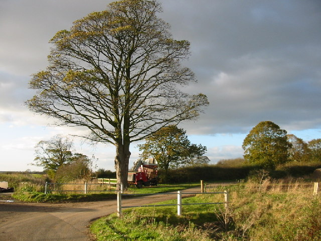 Tree, Harvester and Storm Cloud