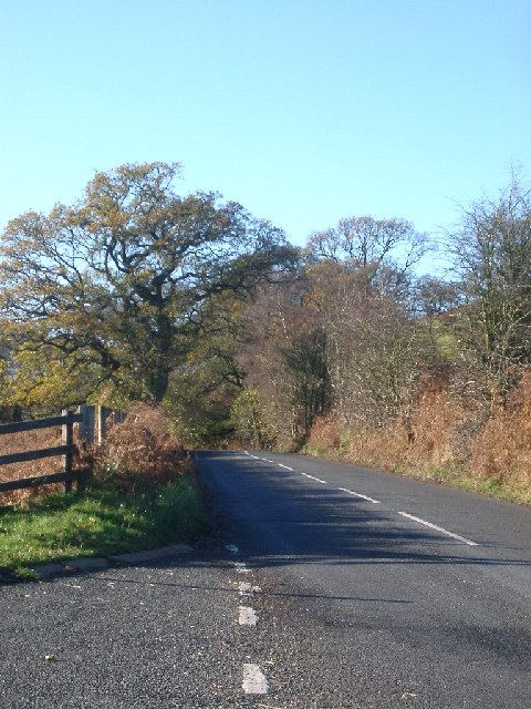 Road and trees, B6341