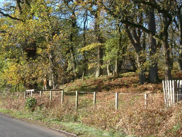 Roadside, Grasslees Wood