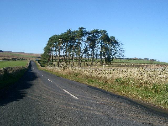 Trees, near A68