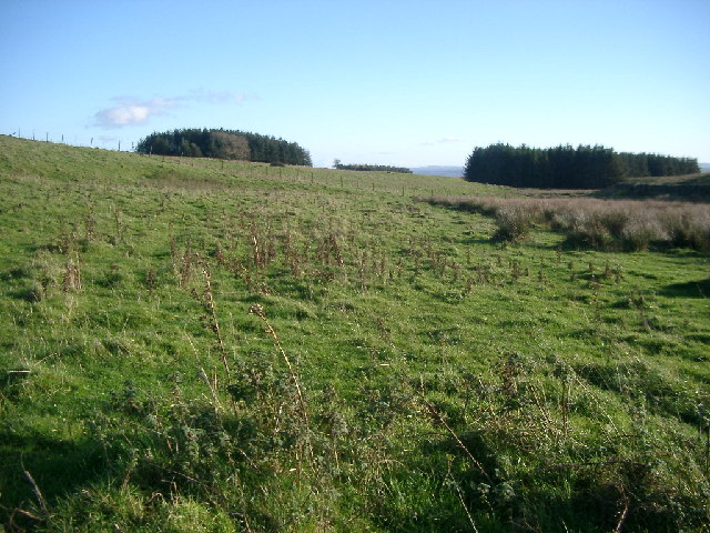 Camps Plantation from Brocolitia