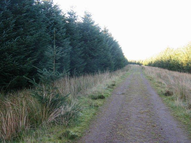 Road, Deepsyke Forest.