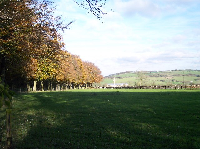 Beech Trees to Wickfields Farm