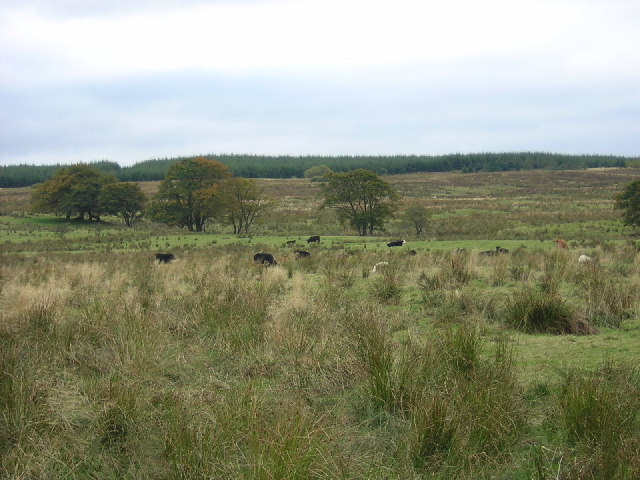 Rough Grazing Adjacent to Ardochrig Road