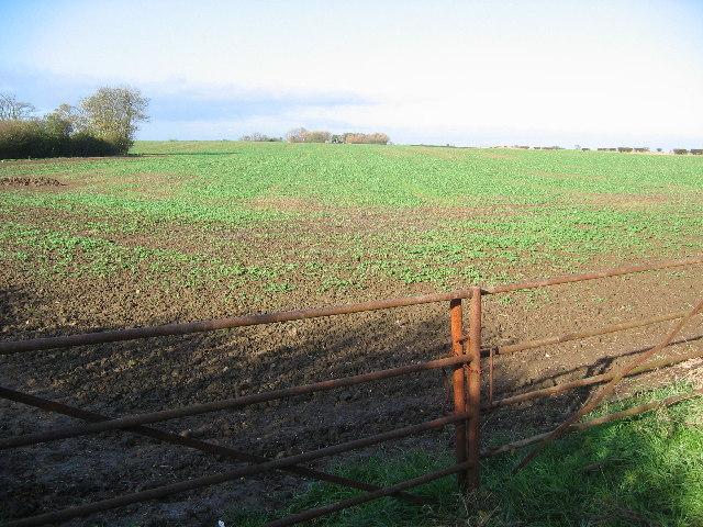 Farmland at TA15625378