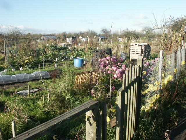 Allotments off The Avenues