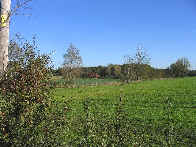 Dewley Wood, Blake Hall, Essex