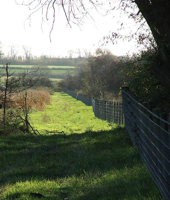 Grassy Track