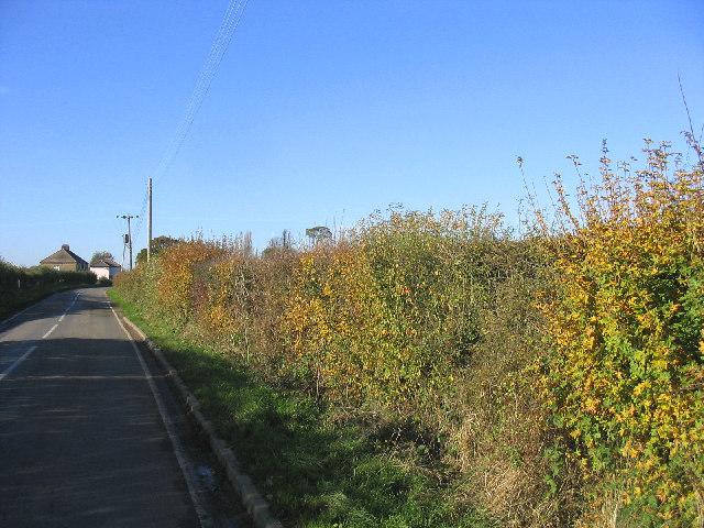 Autumnal Hedge - Magdalen Laver, Essex