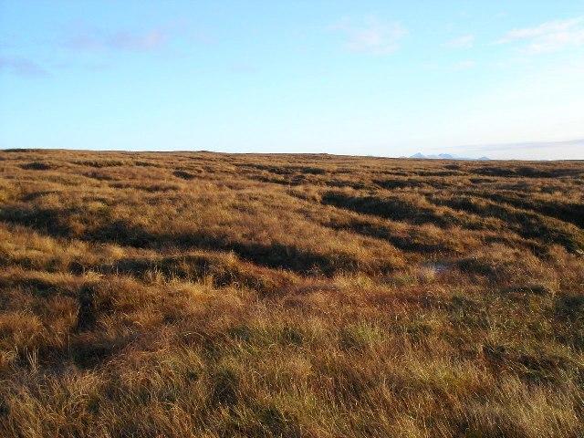 Grassy bog
