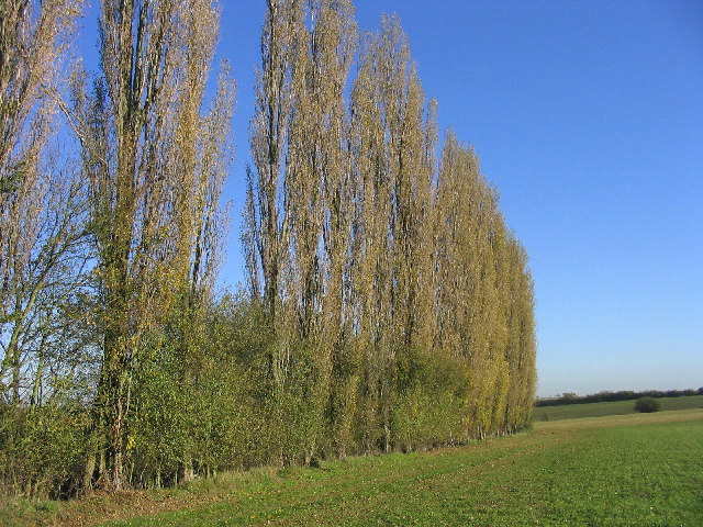 Poplar Trees, Bobbingworth, Essex