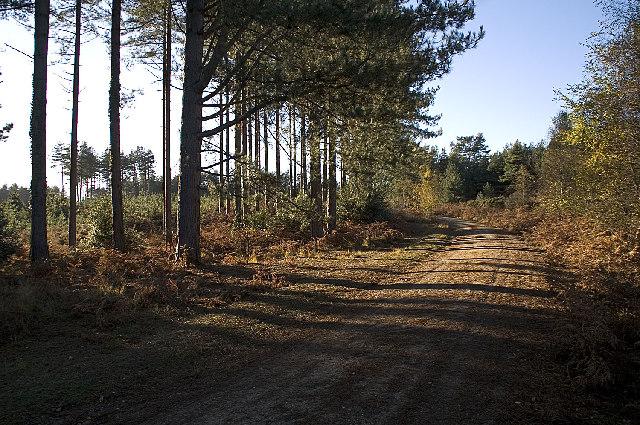 Gore Heath, Dorset