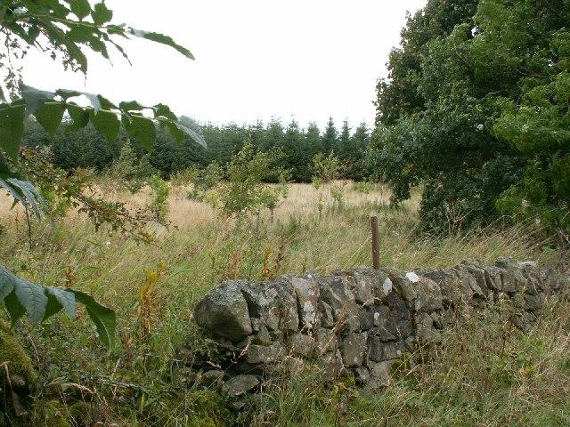 New broad leaf plantation by Falfield.