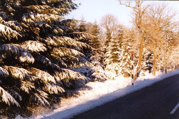 Forestry at Clargillheadon A686