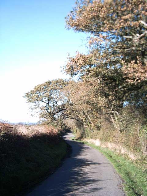 Oak leaves turning on the Tarka Trail