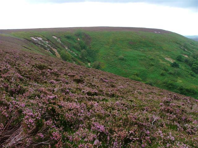 Arden Great Moor