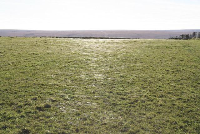 Exmoor: field near Little Ashcombe
