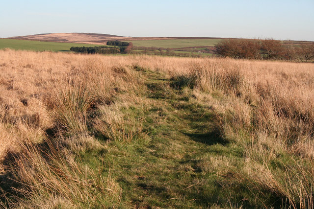 Exmoor: bridlepath near Elsworthy