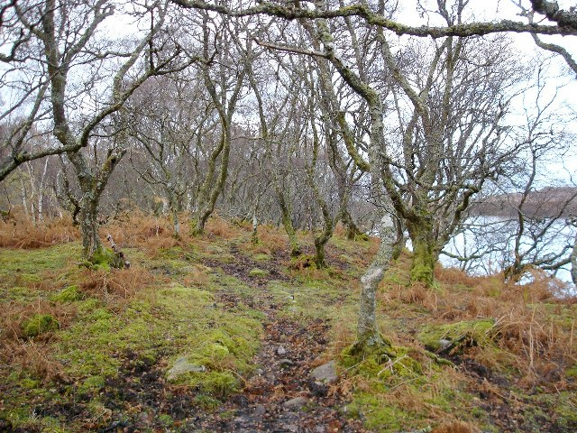 Woodland on the shore of Loch na Feithe Dirich