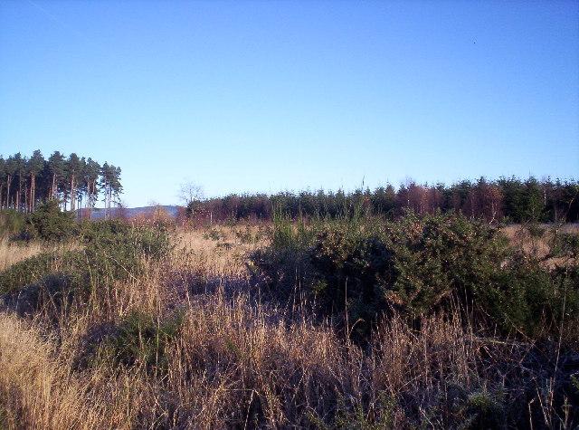 Lady Jane's Plantation