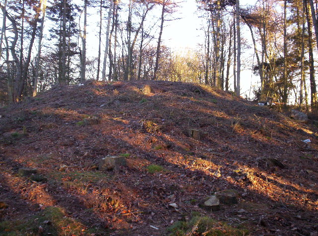 Tumulus in the woods near Trinity