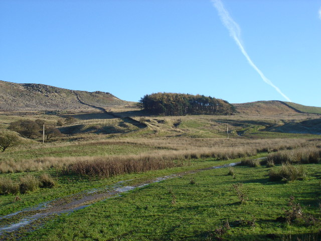 Woodland on Hall Fell